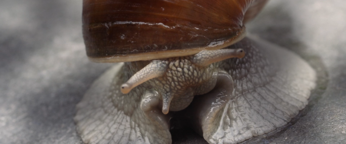 21284 Snail